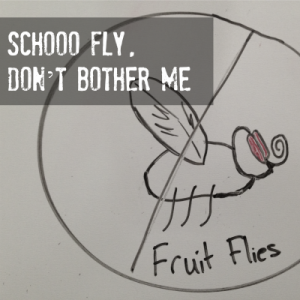 How to get rid of fruit flies at bars